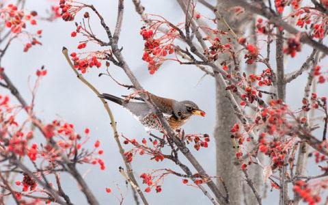 i-frutti-dellinverno-